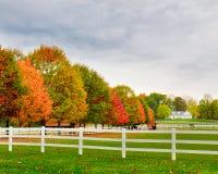 Ферма осенью 3 лошади Стоковая Фотография RF