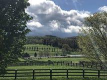 Ферма лошади изображения совершенная Стоковые Изображения RF