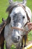 Ферма лошади Стоковая Фотография
