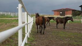 Ферма лошади сток-видео