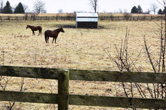 Ферма лошади Стоковое Изображение RF