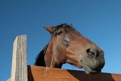 Ферма лошади Head Стоковые Фото