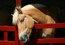 Ферма лошади Head Стоковое фото RF