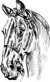Ферма лошади Head Стоковые Изображения RF