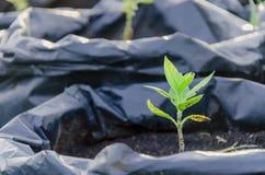 Ферма питомника органическая Стоковое Изображение