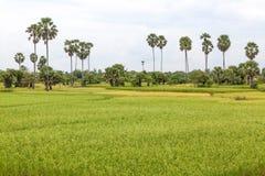Ферма поля Камбоджи в kampong spue провинция Стоковое Фото