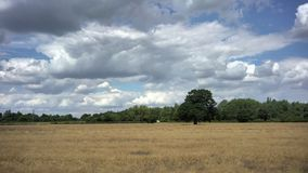 Ферма пшеницы в сельском районе сток-видео