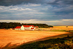 Ферма пшеницы Стоковые Фото