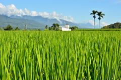 Ферма риса в стране стоковое фото rf