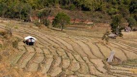 Ферма риса после держать стоковое изображение rf