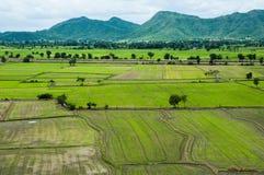 Ферма риса Стоковое Изображение RF