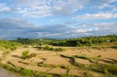Ферма риса стоковые изображения