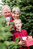 Ферма рождественской елки Стоковая Фотография