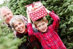 Ферма рождественской елки Стоковые Фото