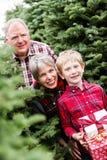 Ферма рождественской елки Стоковое Фото