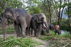 ферма слона Стоковое Изображение