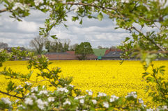 Ферма суффолька весной Стоковая Фотография RF