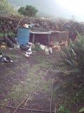 ферма счастливая Стоковое Фото