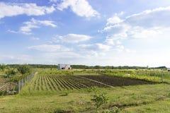 Ферма с полем, садом, ландшафтом стоковое изображение rf