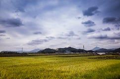 ферма террасы падиа под небом Стоковые Изображения RF