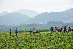 Ферма лук-порея Стоковые Изображения RF