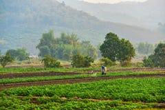 Ферма фермера женщины insecticiding vegetable Стоковое Изображение RF