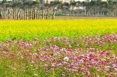 ферма цвета стоковая фотография rf