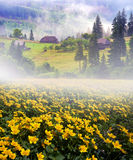 Ферма цветка в тумане Стоковое фото RF