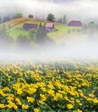 Ферма цветка в тумане Стоковое Изображение RF