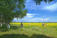 Ферма цветка в Zhosu, Синьцзян Стоковая Фотография RF