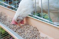 ферма цыпленка Стоковое Фото