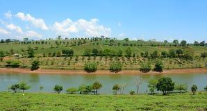 Ферма чая на гористой местности положения Bao Стоковые Фото