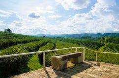 Ферма чая с голубым небом Стоковое фото RF