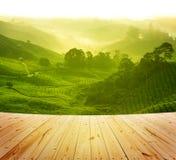 Ферма чая Стоковые Фото