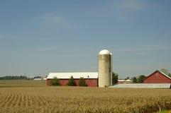 ферма Стоковая Фотография RF