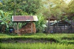 Ферма Стоковые Изображения RF