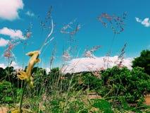 Ферма Longan Стоковая Фотография RF