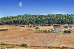 ферма menorcan Стоковое фото RF