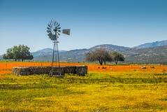 Ферма Namaqua Стоковая Фотография