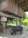 ферма philippines стоковое фото rf