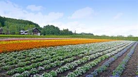 Ферма Tomita, Хоккаидо, Япония Стоковые Фотографии RF