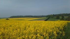 Ферма Winterborne Стоковое Изображение RF