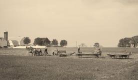 Фермеры Амишей принося в сено стоковое изображение rf