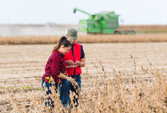 Фермеры в полях сои перед сбором стоковые фотографии rf