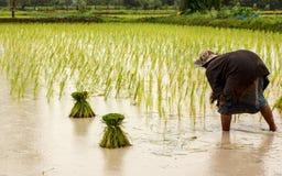 Фермеры в Таиланде стоковое изображение rf