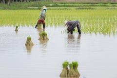 Фермеры в Таиланде Стоковая Фотография RF