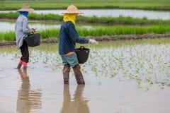 Фермеры в Таиланде Стоковое Фото