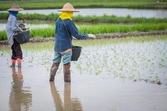Фермеры в Таиланде Стоковые Изображения