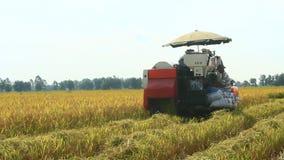 Фермеры жать рис в полях машиной видеоматериал