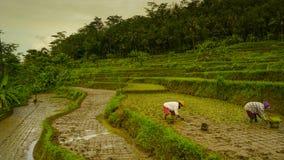 Фермеры засаживают семена в поле стоковое фото rf